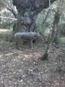VI Trofeo Kiowa de Recorrido de Bosque 3D261014 (1)