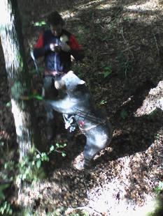 VI Trofeo Kiowa de Recorrido de Bosque 3D261014 (3)