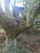 VI Trofeo Kiowa de Recorrido de Bosque 3D261014 (4)