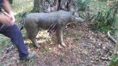 VI Trofeo Kiowa de Recorrido de Bosque 3D261014 (5)