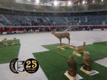 I trofeo Vitoria indoor 3d 240218 (25)
